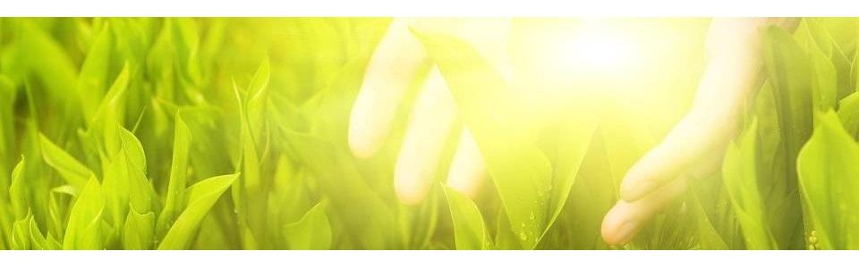 Mandala Egészségkuckó